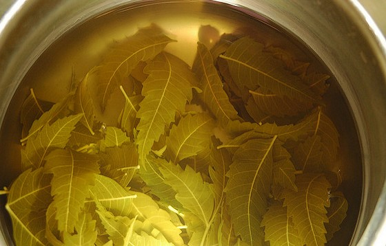 Steeping neem leaves.
