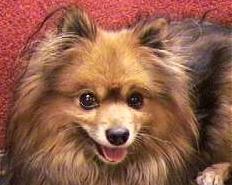 One happy, flea free dog!