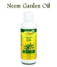 Neem Oil Spray: Buy or Make Your Qwn?